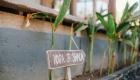 Yoga Bliss Lembongan, Nusa Lembongan Villas, Lembongan Hotels, Lembongan Resorts, Lembongan Bungalows, Lembongan Villas, The Lembongan Traveller, Nusa Lembongan Hotels, Nusa Lembongan Resorts, Nusa Lembongan Bungalows, Nusa Lembongan Villas,