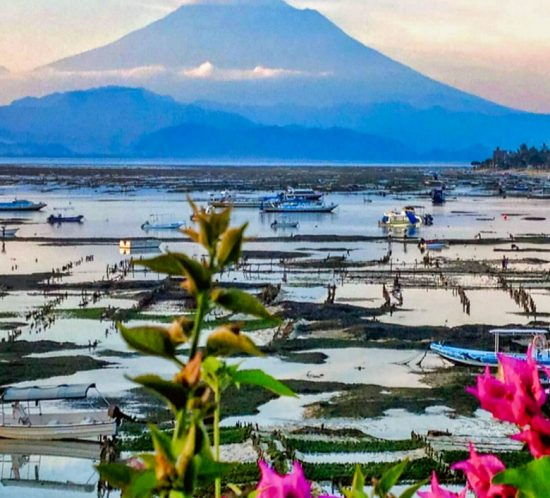 SEAWEED FARMING RETURNS TO LEMBONGAN, Lembongan Hotels, Lembongan Resorts, Lembongan Bungalows, Lembongan Villas, The Lembongan Traveller, Nusa Lembongan Hotels, Nusa Lembongan Resorts, Nusa Lembongan Bungalows, Nusa Lembongan Villas,